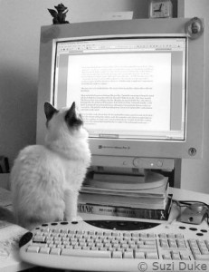 Cat reading the trust document
